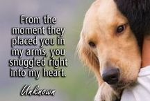 #Dog Quotes and Proverbs / The most popular proverbs and sayings about your four-legged friends! / by ForDogTrainers.com