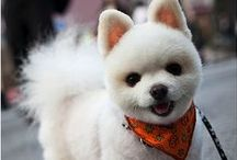 Dog Grooming Ideas / Become your pet's personal stylist! Be inspired with the best dog hair styles! / by ForDogTrainers.com