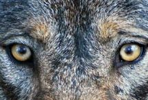 Hungry Like the Wolf / by Hannah Browe