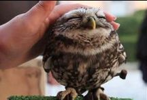 Wohoo Owly