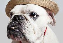 The Adventures of Honcho /  The deaf bulldog / by Malynda Resh