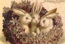 Bunnies to Delight