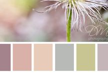 Colors / by Nalat Lao