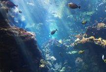 Under the Sea / by Maxine Burleigh