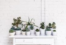 SUCCULENTS / by Catha