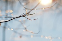 winter / creative inspiration for things to see, taste, experience and photograph in the winter. / by Dawn Shiree