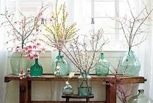 Bodacious Blossoms & Plantlife
