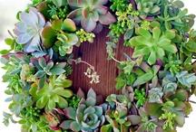 Gardening Stuff / by Karen P