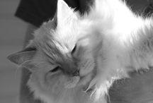 Jesper / My precious little lion. ♥