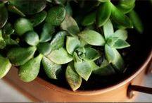 PLANTAS Y MACETAS / Plantas