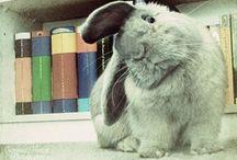 Cute/Fluffy/Yummy / by Junior Farias