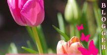 Der Gartenblog Cluster: Garten - Gartenblogger - Gruppenpinnwand / Du möchtest mit Deinem Gartenblog auch auf Pinterest durchstarten? Dann bist Du hier genau richtig! Setze maximal einen Pin von Deinem Blogbeitrag hier auf das Gruppenboard. Hast Du keinen Blog, aber trotzdem ein Gartenliebhaber? Kein Problem, Du darfst gerne dabei sein.  Willst Du mitmachen? Melde Dich unter topfgartenwelt@gmx.at oder garteninspektor@gmail.com!