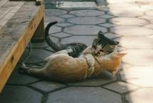 Dept. of Animal Affection / Woman's best friends. / by Bridget B