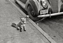 Dept. of Interesting Photos + People / Whatever strikes me. / by Bridget B