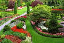 Gardens Galore / Gardens, gardens everywhere! Anything colorful that strikes our fancy!