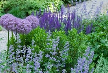 GARDENING / Trädgård odling flowers potager raised beds planting