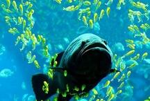 <3 Things: Underwater World