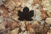 |Fall|