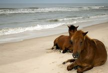HORSES / Beautiful images of horses / by Camilla Callenmark