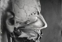 Anatomy / by Vanessa Nadia Moylan