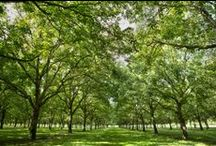 Walnut Industry / Photos from walnut growers. Share the beauty of the orchard, and see the process of how walnuts grow!