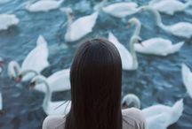 -ballet; swan lake