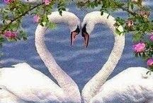 A Hart to Heart / by Janis Hart