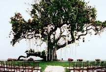 Wedding outdoor ceremonies