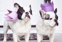 French Bulldog Love... / by Maegan Tintari /...love Maegan