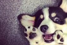 Puppies / um - duh.