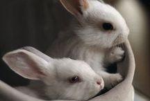 Eastery Ideas... / Easter bunnies... Easter decor... Easter eggs...