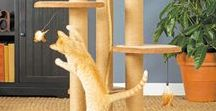Cat Scratch Fever / Great beds and cat scratchers for your Modern Cat!