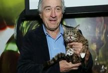 Famous Cat Lovers / Celebs who love cats as much as we do!