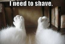 Animal - Dog Funnies! / A little bit of 4 legged humor goes a long way. / by Janie Burnette, REALTOR® Real Estate Georgia, Cumming, Forsyth County rea estate agent