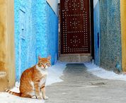 Travelling Cats / Travel and cats come together!