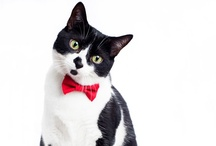 12 Days of Cat-mas: Gifts you and your cat want / by Modern Cat