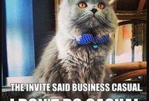 LOL Catz / For the funny feline.