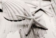 Seaside ★ / by Paola Mancinelli