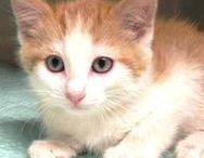 Adoptable Cats / We love when cats find their forever home!