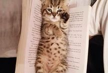 Modern Cat's Best Reads / Editor in Chief Connie Wilson's Book Club