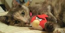 Cat of the Week / Our fabulous, cute, and lovable Cats of the Week!
