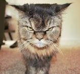 Grumpy Cats / Let's be honest - there's something so funny and relatable about a grumpy cat!