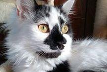 Stunning Cat Photos