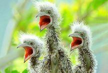 Wings and Beaks