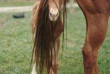Horses / by Jessica Kampmeier