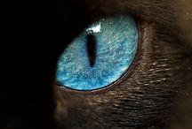 Eyes / by Wendi Colebrissi