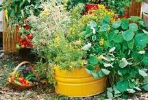 Garden Projects you Can Do--Easy