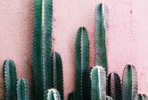 CACTI / by style addict