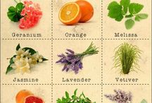 Au Natural / Essential oils and Homeopathic/Naturopathic remedies  / by Colleen Boyer