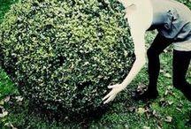 TopiaryEspalierParterrePleached                             LabyrinthMaze